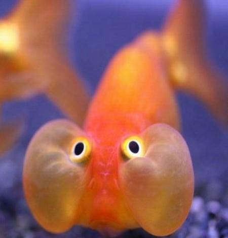 Questo non un pesce di aprile oltreuomo oltreuomo for Immagini pesciolini