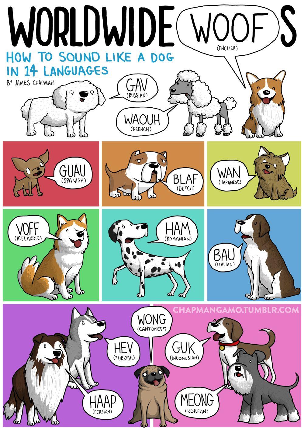 Come fa il cane