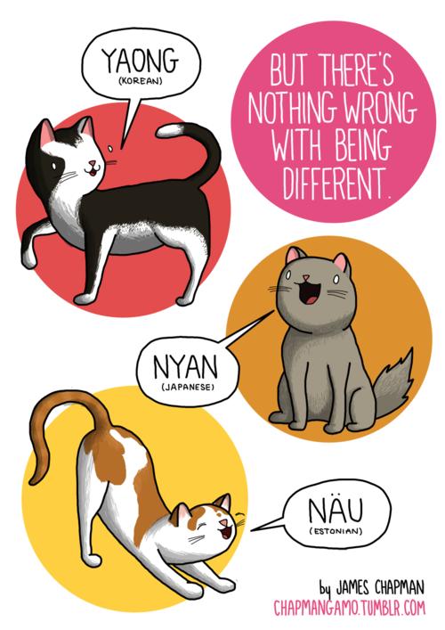 Come fa il gatto