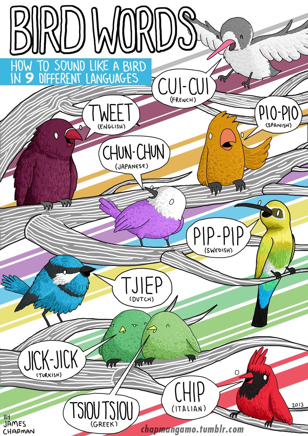 Come fa l'uccello
