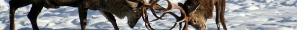 giungla aperitivo: il cervo